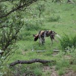 Photo of Echo Africa Safaris & Transfers - Day Tours