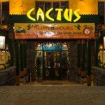 Cactus照片