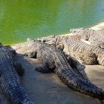 Photo of Krokodilfarm Animalia