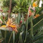 Photo of Crown Resorts Club Marbella / Club Regency Palms