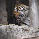 Emperor Valley Zoo照片