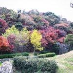 Photo of Kobe Nunobiki Herb Garden