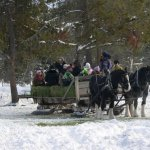 Elk Feeding Sleigh Ride