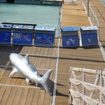 Photo de Oceanarium Explorer