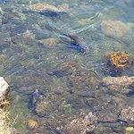 Sea lions' paradise