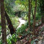 Photo of Tropical Spice Garden