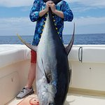 Tuna 260lb - Hannibal Bank