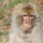 Wild- & Erlebnispark Daun Foto