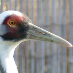 Watchful crane