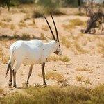 Foto van Dubai Desert Conservation Reserve