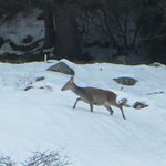 Photo of Chalet Alpenrose Bio Wellness Naturhotel