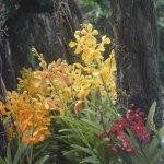 Photo of The Hoi An Orchid Garden Villas