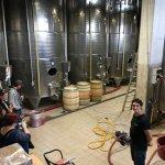 Gambino Winery - the vats