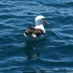 صورة فوتوغرافية لـ Albatross Encounter