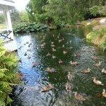 gazebo=duck feeding station