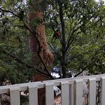 Lane Cove River Tourist Park Photo