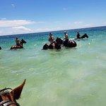 Horses loved the swim