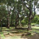 Mahogany trees in garden