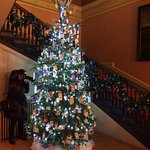 One of the Christmas trees 2017