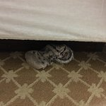 Unfortunately this was not a good experience for my family's stay. Hair on sheet, stuck door, so