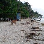 Cocoplum Beach Hotel Photo
