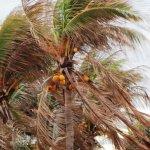Foto de Be Live Havana City Copacabana