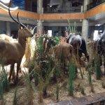 Natural History Museum Photo