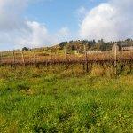 de abdij frontaal zicht met wijngaarden