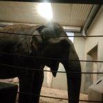 Photo of Augsburg Zoo