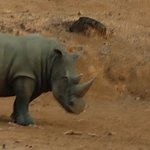 Valokuva: Zoobic Safari
