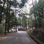 Shaoguan Forest Park의 사진