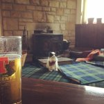 A Tennents with my pooch