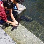 pet an eel?