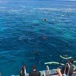 Billede af Calypso Reef Cruises