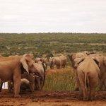 Bild från Gorah Elephant Camp