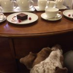 Afternoon tea in the dog-friendly lounge.