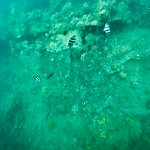 almost bottom of ship wreck