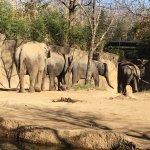 Photo de St. Louis Zoo