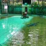 Phuket Zoo Foto