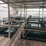 Barelang Seafood Restaurant