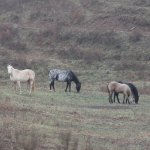 Countryside with horses