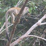 Stunning wildlife on Sani Lodge excursions