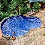 Jungle Vista Inn Foto