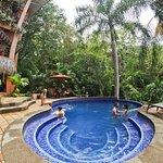 Foto de Jungle Vista Inn