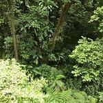 Rainforest Adventures Rainforest Excursion Tour照片