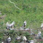 Prek Toal Bird Sanctuary의 사진