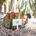 Photo de Courtyard Phoenix Mesa