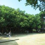 Foto de Casa del Árbol de Anping