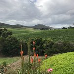 Photo of Vinetrekker Wine and Food Tours
