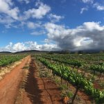 Photo of Tanagra Wine + Guestfarm